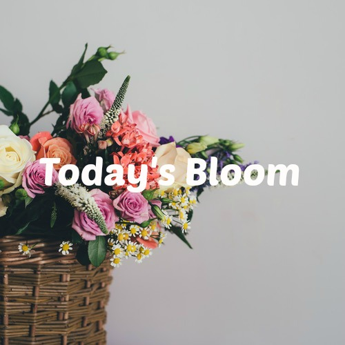 Today's Bloom