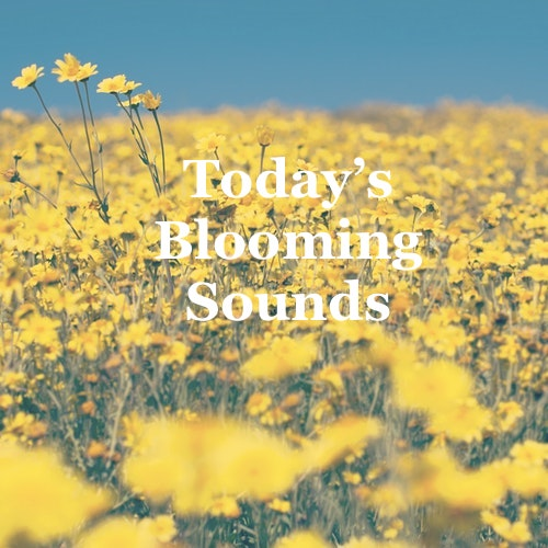 "New Twistedsoul ""Today's' playlist."